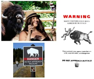 Forty three year-old Mississippi was gored and tossed into the air.  Signs are placed conspicuously and leaflets are paced out by Yellowstone Park officials.  http://www.thegodsgrace.com/2015/07/24/woman-tries-to-take-selfie-with-bison-gets-flipped-into-air/
