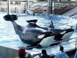 Blackfish, Panda Cams and the Bottom Line